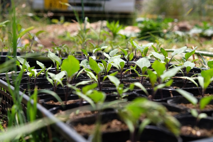 無農薬・減肥料で野菜作りに挑戦する農家さんインタビュー | 種の持つ可能性を信じる-岡部さん PART_1